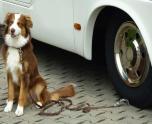Hundfäste Plattan läggs under hjulet